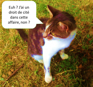 Le chat attendant l'adoption